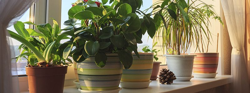 3 Useful Benefits Of Indoor Plants