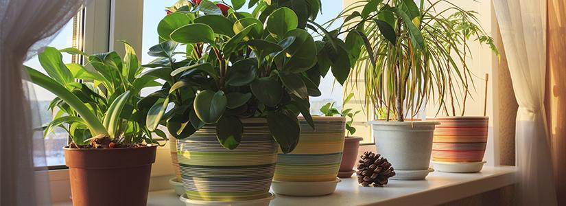 3 Useful Benefits Of Indoor Plants
